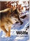 Wölfe, Jäger mit Teamgeist